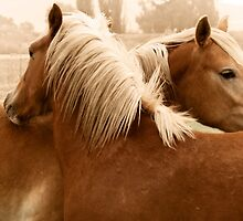 Horse Hug by Creative Images