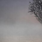 Misty Winter's morning by Maree  Clarkson