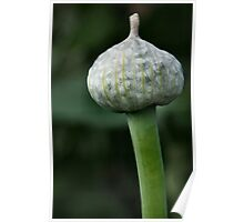 Onion Seed Head Poster