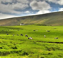 Cows in field by Avalinart