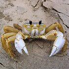 Crab by Kreardon