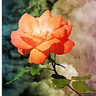 A Rose With A View by Christine Lake