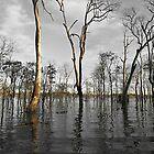 Wooroolin Wetlands by janewiebenga