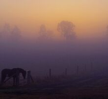 Overo Dawn by Penny Kittel