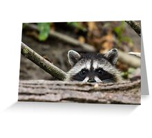 Peering Raccoon Greeting Card