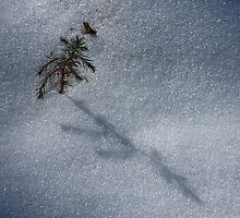 Winter Details V by Otto Danby II