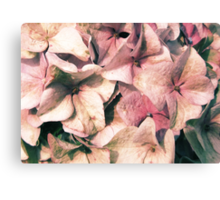 Powder Pink is Beautiful Canvas Print