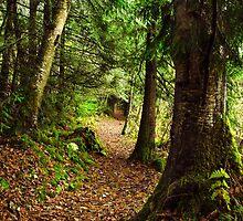 A wander through wonderland by Jean Poulton