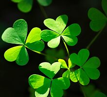 Perfect Green Shamrock Clover by Christina Rollo