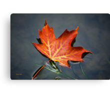 Red Maple Leaf Canvas Print