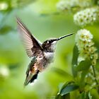 Peaceful Love Hummingbird by Christina Rollo