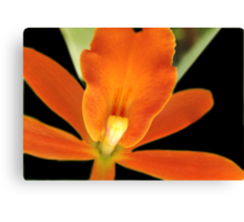 Carrot Top - Orchid Alien Discovery Canvas Print