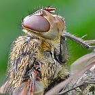 Flies Head  by relayer51