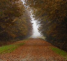 Fog On A Country Road by WildestArt