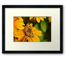 Pearl Crescent Butterfly Framed Print