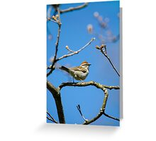 Chipping Sparrow in a Tree Greeting Card