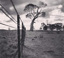 Black and white fence and tree by MattLawson