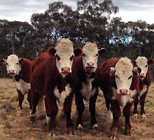 Herd of funny cattle by MattLawson