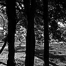 Tree Silhouettes in Sydney by Wolf Sverak