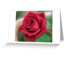 Dreamy Red Rose Greeting Card