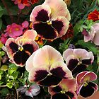 Sextet of Pretty Summer Pansies by MidnightMelody
