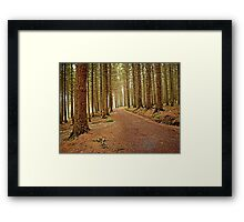 Mourne Mountains Forest Framed Print