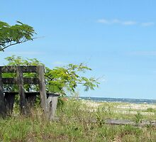 """Bench with a View by Scott """"Bubba"""" Brookshire"""