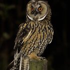 long eared owl by Peter Wiggerman