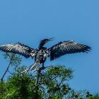 Cormorant - Wild Bird by Evelyn Laeschke