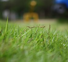 Play Grass by DivaGupta
