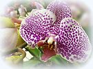 Orchid by Elaine Bawden