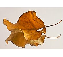 Seeing Double Autumn Leaf  Photographic Print