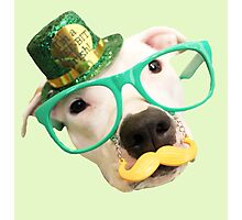 St Patricks Day Dog Photographic Print