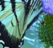 Swallowtail Butterfly Sticker