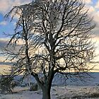 Iced Tree by RedHillDigital