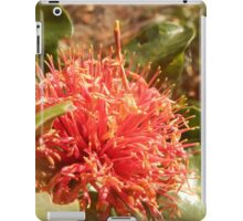 Banksia ilicifolia - Holly leaved Banksia in Red iPad Case/Skin