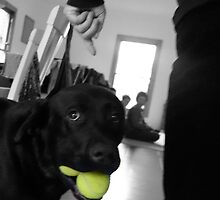 Tennis balls by Matt Mawson