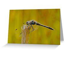 Black Darter Dragonfly Greeting Card