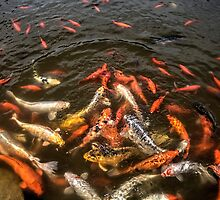 Carp Feeding Frenzy by Roger Passman