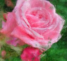 Pink Roses in Anzures 2 Sketchy by Christopher Johnson