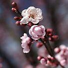 Wonderful Spring  by Joy Watson