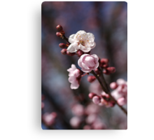 Wonderful Spring  Canvas Print