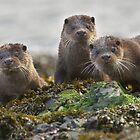 Scottish Otter family by wildlifephoto