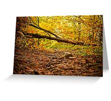 Mysterious Forest - Nature Photography Greeting Card
