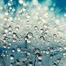 Dandy Blue & Drops by Sharon Johnstone