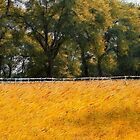 Golden Meadows by Brian Gaynor