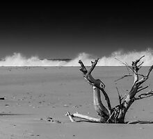 Lonely Tree on a Beach by axemangraphics