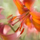 Alpenglow by Marilyn Cornwell