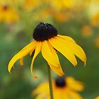 Black Eyed Susan by Linda  Makiej Photography