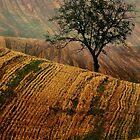 Carpet fields by JBlaminsky